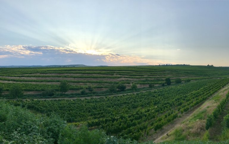 Tohani Vineyard